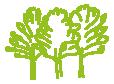 iguacu trees
